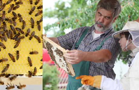 Méh megfigyelési pályázat Waldorf-intézmények részére